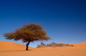 Canva-Landscape-of-Sand-Dune