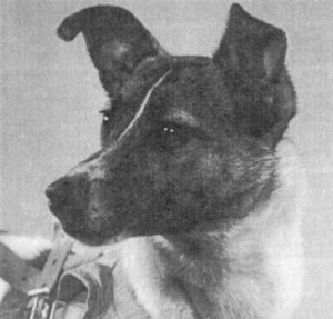 CHetveronogii-kosmonavt-Lai-ka-pered-poletom-1957-g