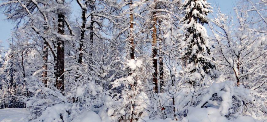 E.Vasileva-V-zimnei-skazke