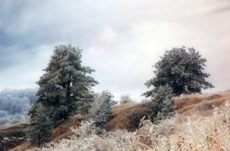 L.Alekseeva-Na-zimnem-holme