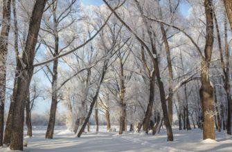 V.Loginova-Altai-skii-krai-