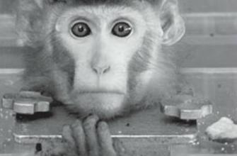shimpanze v kosmose
